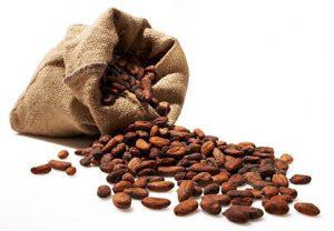 fave di cacao dentro sacco in juta aperto